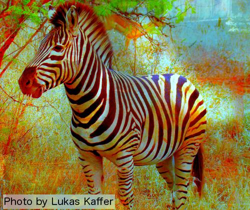 Zebra Leadership People OnTheGo